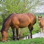 معلومات عن الحصان للاطفال