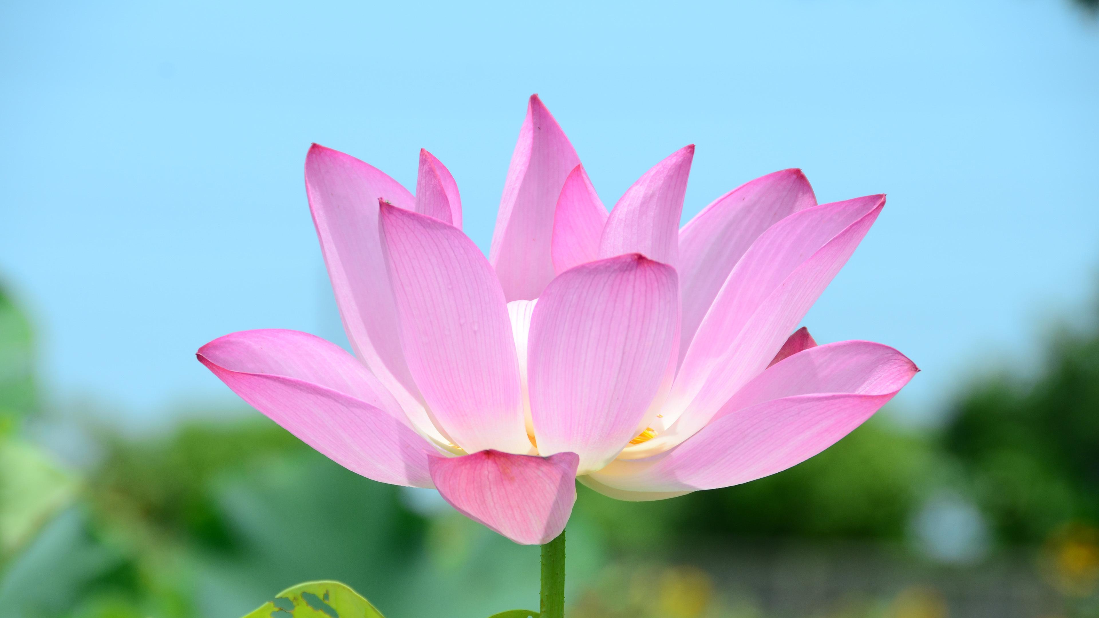 اسماء الورود بالصور المرسال
