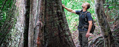 ما الموطن الأصلي لشجرة العود %D8%B4%D8%AC%D8%B1-%D8%A7%D9%84%D8%B9%D9%88%D8%AF-500x198