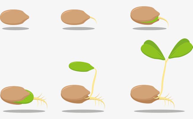 شرح مراحل نمو النبات للأطفال المرسال