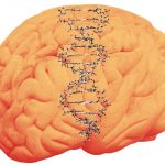 دراسة جديدة : علاقة مرض التوحد بنقص الزنك 