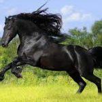 تفسير رؤية الحصان الاسود في المنام