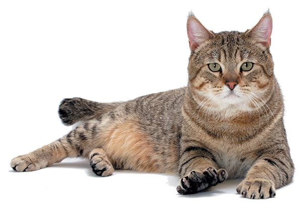 Stages of growth of cats Stages of growth of cats  D8 A7 D9 84 D9 85 D8 B1 D8 AD D9 84 D8 A9  D8 A7 D9 84 D9 88 D8 B3 D8 B7 D9 89  D9 84 D9 84 D9 82 D8 B7 D8 B7