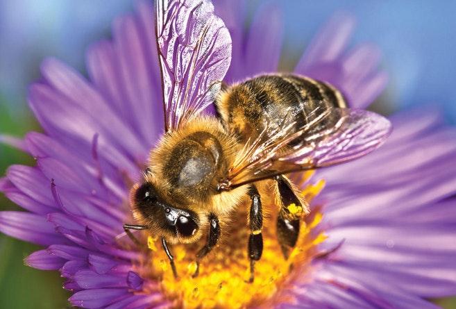 number of bee eyes Number of bee eyes  D8 A7 D9 84 D9 86 D8 AD D9 84  D9 88  D8 A7 D9 84 D8 B1 D8 AD D9 8A D9 82