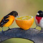 ما هي أضعف حاسة عند الطيور