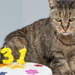 c7ebb953e7cdb صور قطط كيوت 2019 · مراحل نمو القطط