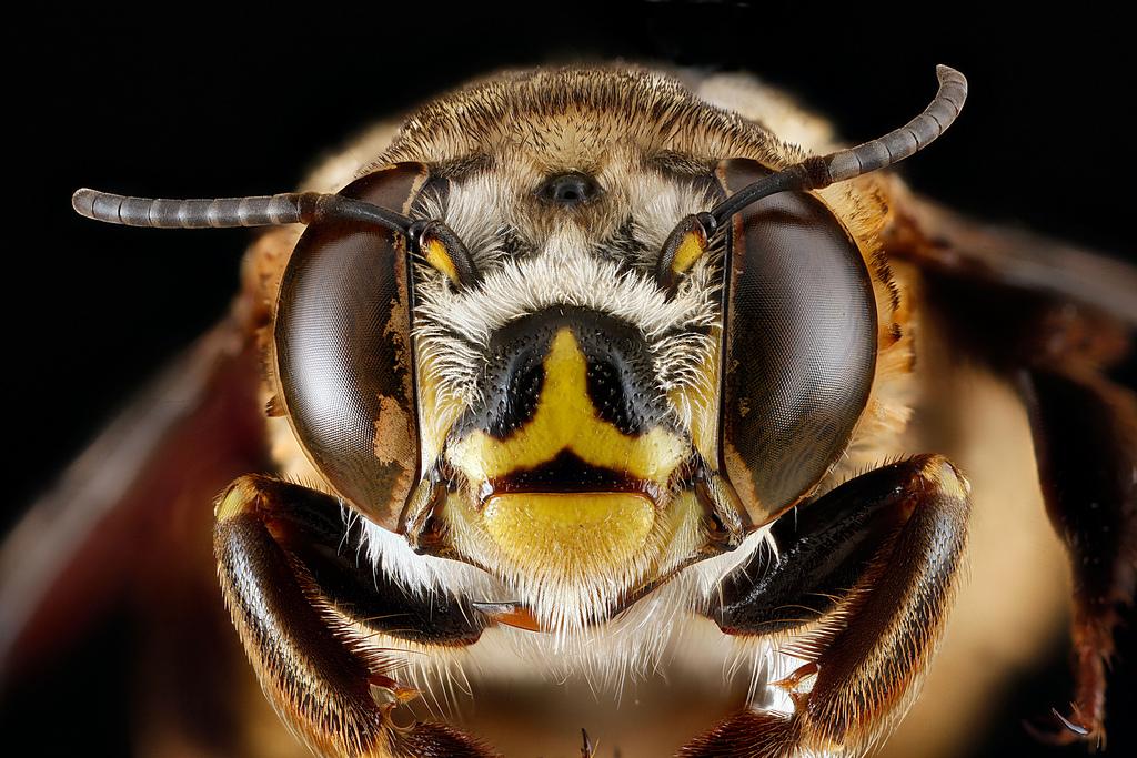 number of bee eyes Number of bee eyes  D8 B9 D9 8A D9 88 D9 86  D8 A7 D9 84 D9 86 D8 AD D9 84 D8 A9