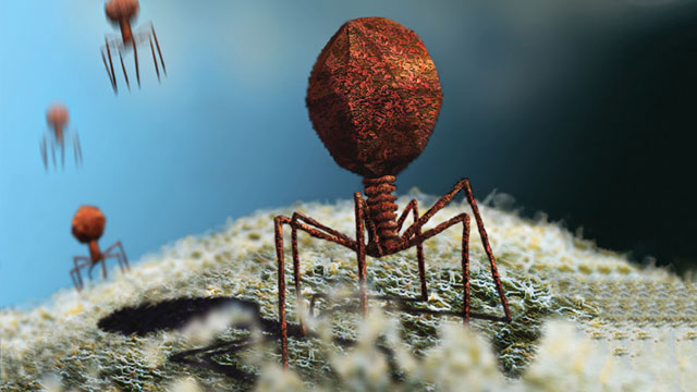 بحث عن البكتيريا والفيروسات والفرق بينهما موسوعة