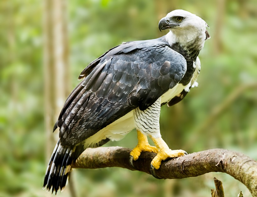 The most powerful eagle in the world The most powerful eagle in the world  D9 86 D8 B3 D8 B1  D8 A7 D9 84 D9 88 D8 AD D8 B4  D8 A7 D9 84 D9 82 D9 88 D9 8A