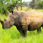 موطن وحيد القرن