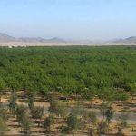 الغابة الشرقية في جدة