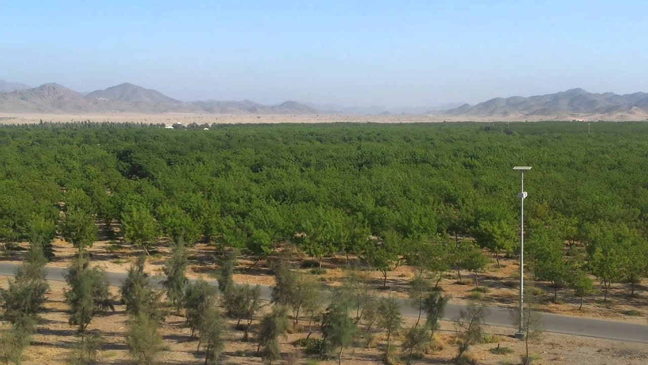 الغابة الشرقية في جدة | المرسال