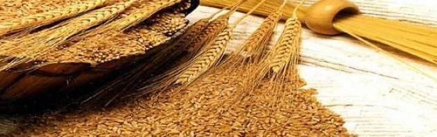 فوائد القمح للقولون