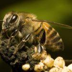 ماذا تفعل عند التعرض لهجوم النحل الإفريقي