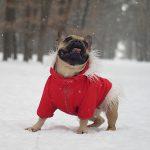 خطورة فصل الشتاء على الكلاب