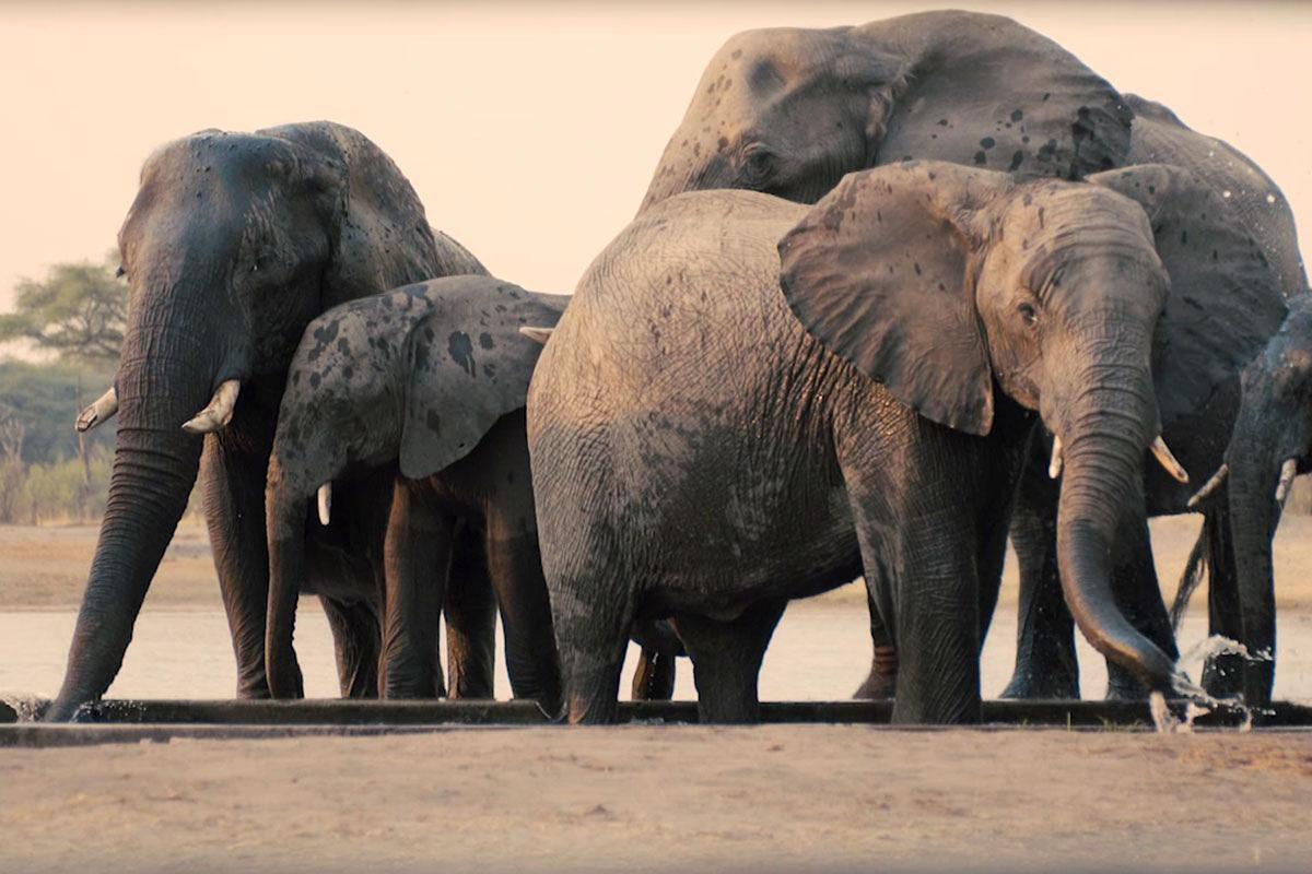 أفضل رحلات السفاري الإفريقية رحلات-السفاري-الخاصة-في-بوتسوانا-وزيمبابوي.jpg
