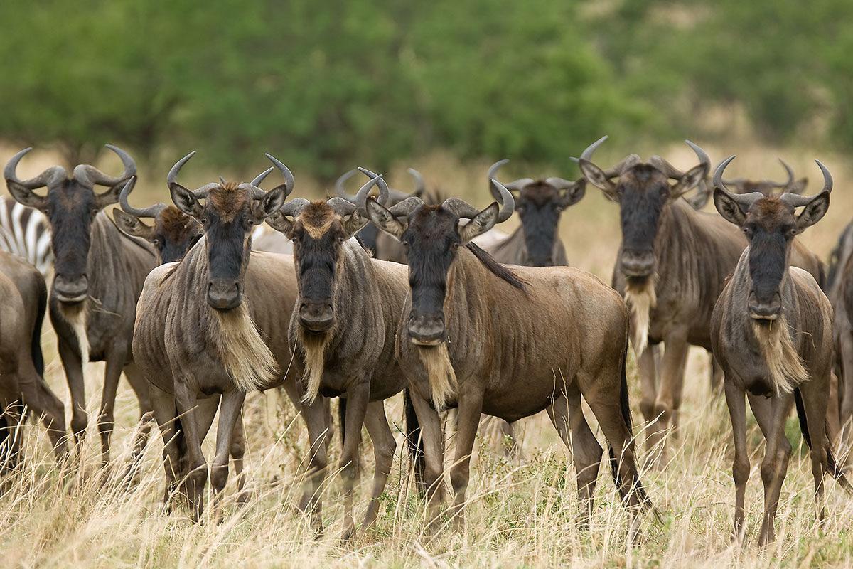 أفضل رحلات السفاري الإفريقية رحلات-سفاري-كينيا-وتنزانيا-في-ماساي-مارا-ومحمية-سيلوس.jpg