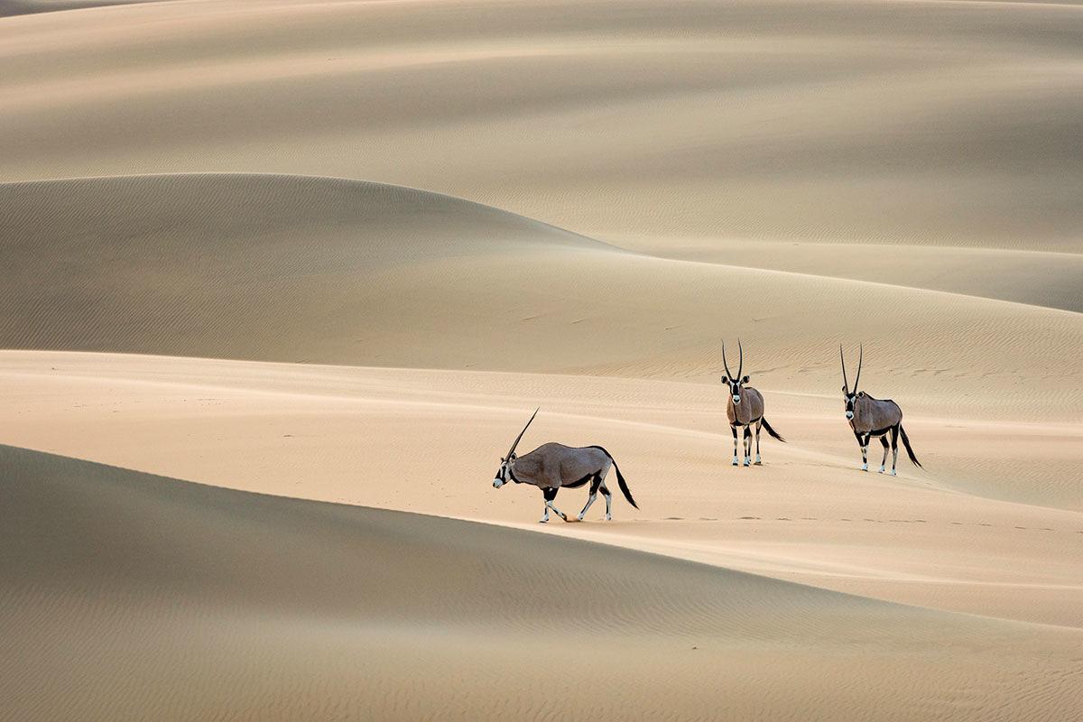 أفضل رحلات السفاري الإفريقية رحلات-سفاري-لمشاهدة-المناظر-الطبيعية-الخلابة-في-تنزانيا.jpg