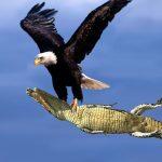 بحث عن طائر النسر
