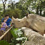 لماذا يحب الأطفال حديقة الحيوانات