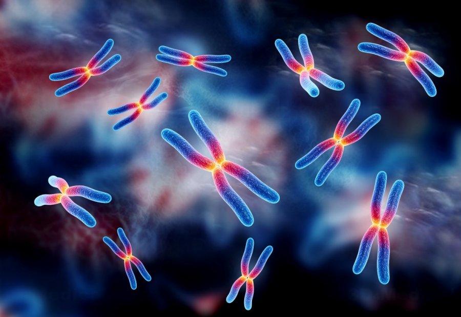 مشكلة خلل الكروموسومات وكيفية علاجها - المرسال