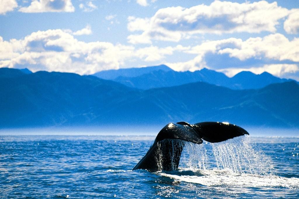 أفضل 10 مناطق للجذب السياحي في نيوزيلندا Kaikoura