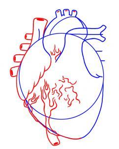 شرح رسم قلب الانسان المرسال