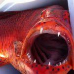 """معلومات عن """" سمك ناجل """""""