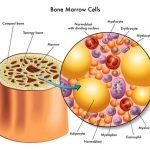 الفرق بين مكونات النخاع الاحمر ومكونات النخاع الاصفر