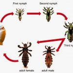 التحول الكامل والناقص للحشرات