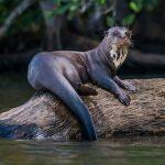 حيوانات تعيش في البحيرة
