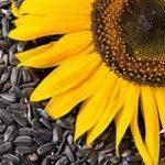 فوائد فصفص دوار الشمس