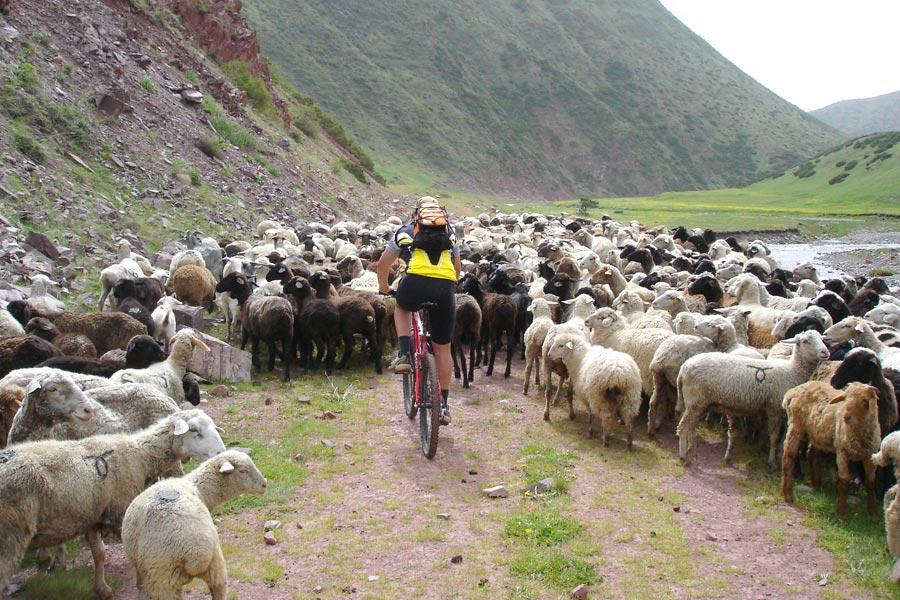 السياحة قرغيزستان رحلة-بالدراجة.jpg