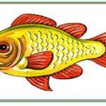 اجزاء السمكة للاطفال