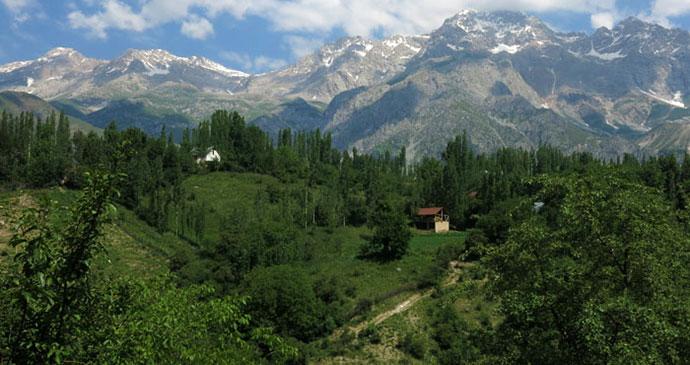 السياحة قرغيزستان غابة.jpg