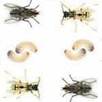 كيف تتخلص الحشرات من الفضلات