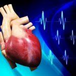 كيف يعمل قلب الانسان