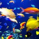 معلومات غريبة عن الاسماك