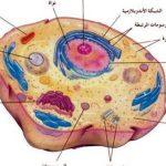 مكونات الخلية الحيوانية ووظائفها