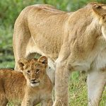 اسماء الحيوانات وصغارها