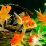 انواع السمك بالصور