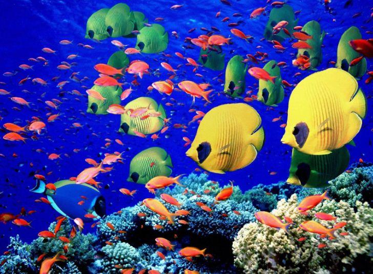 معلومات عن قاع البحر الحياة-في-قاع-البحر.
