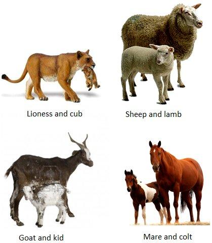 اسماء حيوانات اليفة