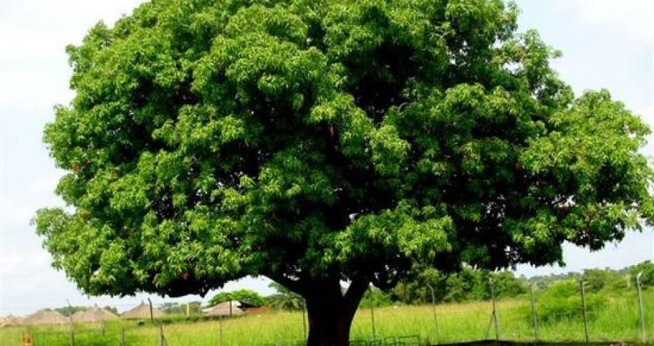 عبارات عن أسبوع الشجرة المرسال