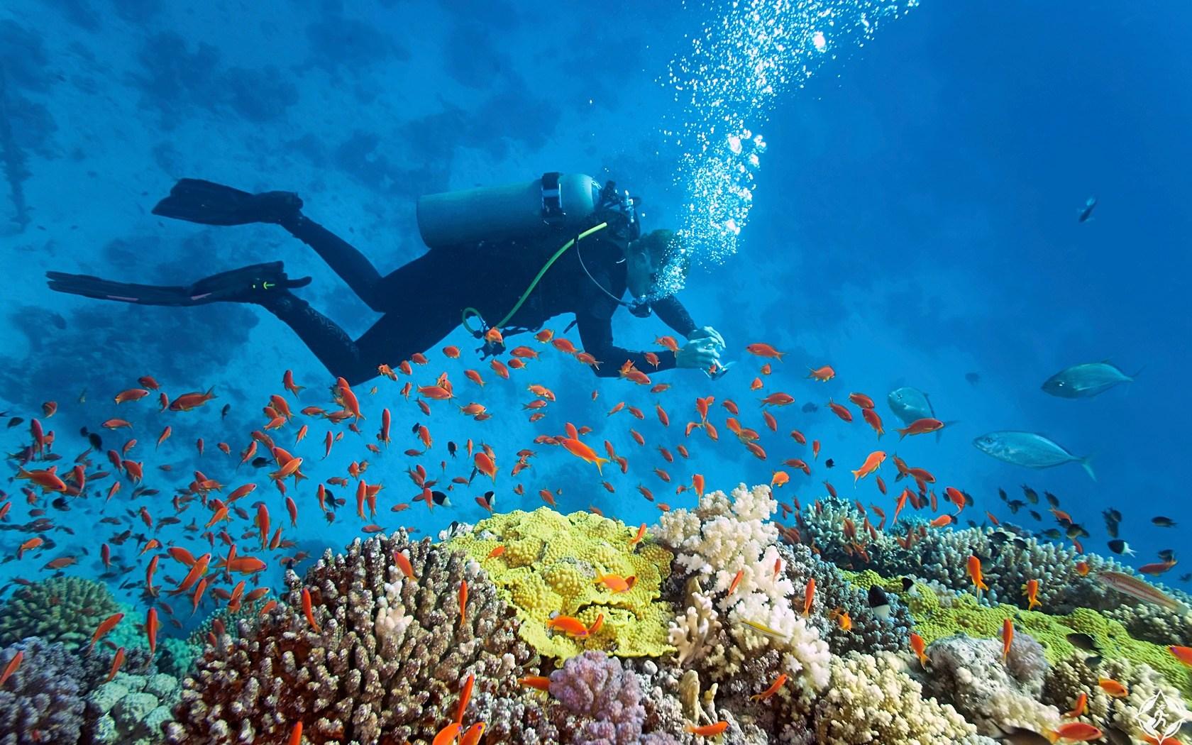 """السياحة في جزر البهاما ط§ظ""""ط؛ظˆطµ-ظپظٹ-ط§ظ""""ط¨ظ‡ط§ظ…ط§.jpg"""