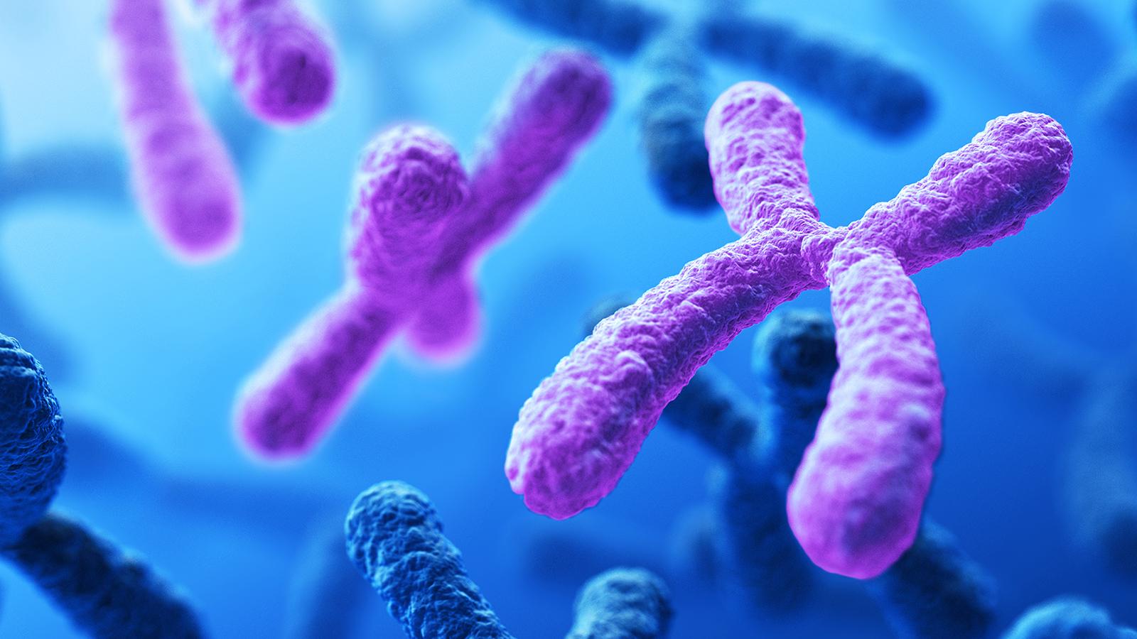 ماهي الوراثة المعقدة والوراثة البشرية المرسال