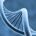 بحث عن الوراثة المندلية