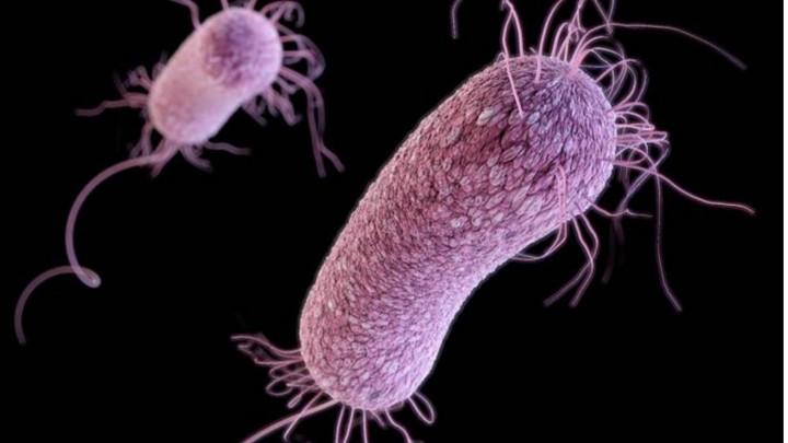 نتيجة بحث الصور عن البكتيريا
