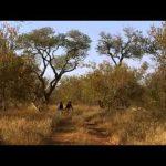 معلومات عن غابات افريقيا