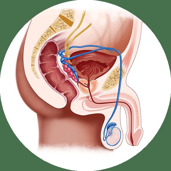 اسباب ظهور حبوب بيضاء على الذكر المرسال